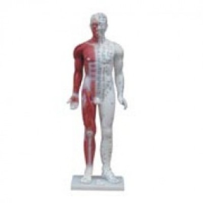 Human Male Acupuncture Model 84cm