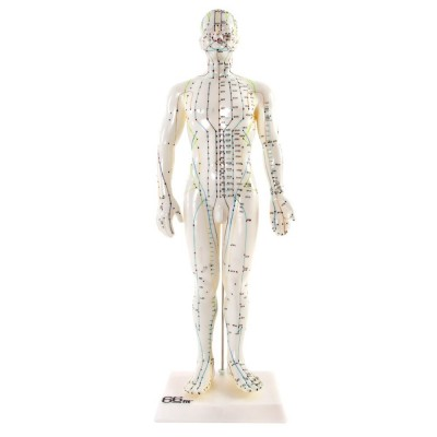 Male Acupuncture Model - 50cm